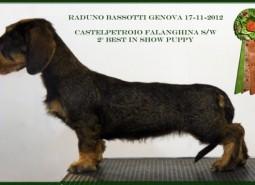17/11/2012 Raduno Bassotti ABC Genova