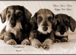 Buon 2013 , happy new year !!!!