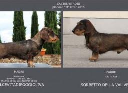 planned litter may 2015 : Ch Dolcevitadipoggioliva x Sorbetto della val Vezzeno