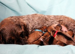 "02/05/2015 Castelpetroio ""M"" puppies were born"