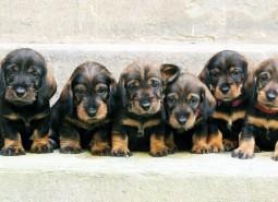 (Italiano) i cuccioli hanno un mese