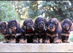"I show you ""CASTELPETROIO- N-"" puppies"