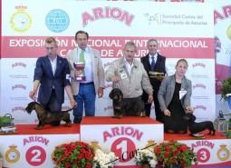 Exp. Int. Asturias 2017 Spain