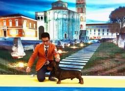 Croatia, Zara dog shows  2019