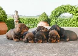 cuccioli P