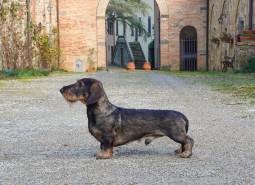 Castelpetroio Pompelmo