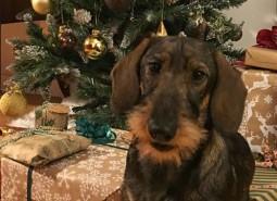 Castelpetroio Pompelmo, his first Christmas