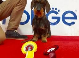 Romagna Winner