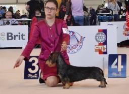 (Italiano) 30/9/2021 Brno World Dog Show 2021