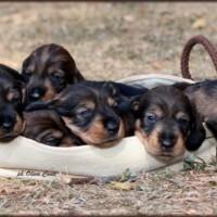 cuccioli F a 3 settimane